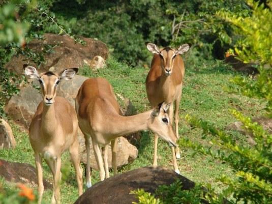 Amilalu » Blog Archive » Photos – Kruger park lodge